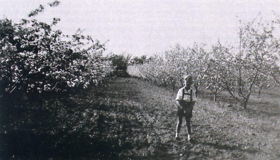 Herluf finder æbler i frugtplantagen
